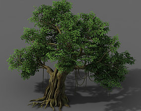 3D model Plant - banyan tree 01