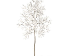 American Elm with Snow 2point2m 3D model