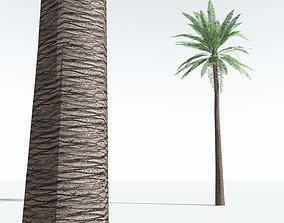 EVERYPlant Date Palm LowPoly 05 --10 VR / AR ready