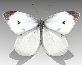 3D model White butterfly