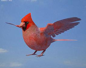 3D Northern Cardinal