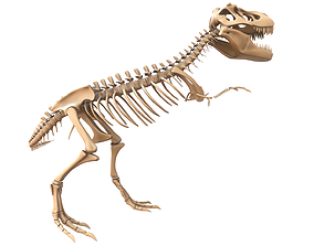 T-rex Skeleton cretaceous 3D model