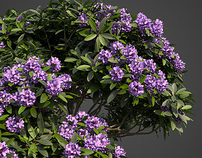 3D 2021 PBR Common Rhododendron Collection