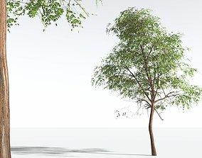 3D EVERYPlant Muira Puama 02 --15 Models--