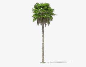 3D Washingtonia Robusta Palm Tree