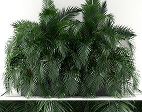 3D Plants collection 358