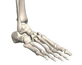 3D Human foot skeleton anatomical