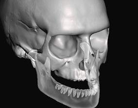 Human anatomy skull fit to teeth 3D printable model