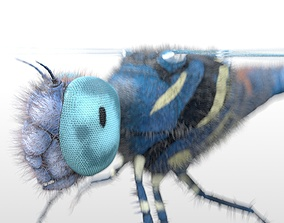 Dragonfly Rigged Hairs 3D asset