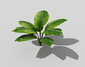low poly tropical foliage 3D model