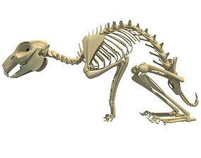 3D model Rabbit Skeleton