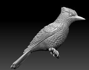 3D print model jay bird