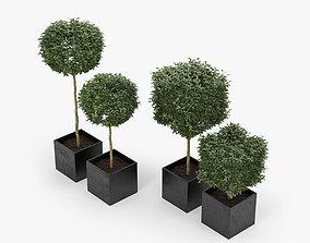 3D Plants Box