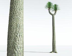 EVERYPlant Compact-Leafed Sigillaria 03 --18 Models--
