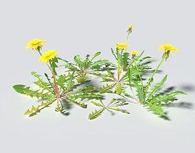 3D model Dandelion Pack