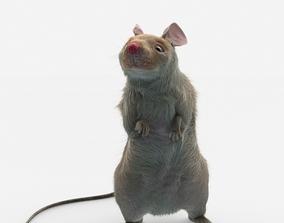 3D mouse rat