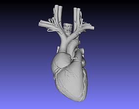 3D print model Heart microbiology