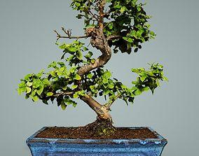 Bonsai Tree 3D model low-poly