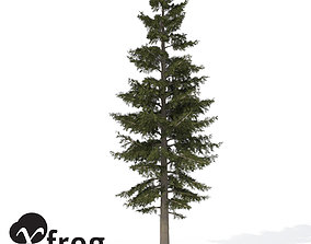 XfrogPlants White Fir 3D model
