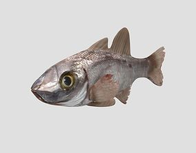 3D asset animated Rig Fish02
