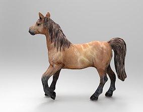 pony 3D asset realtime HORSE