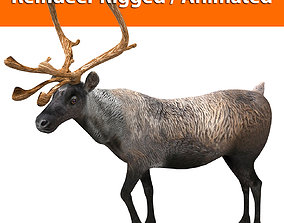 Reindeer Rigged Animated model 3D animated