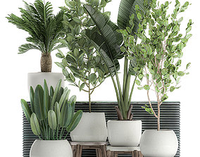 3D model Decorative plants for the interior in white 1