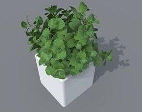 mint plant 3D