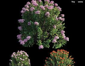 3D Ixora plant set 17