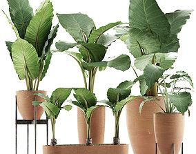 3D Plants Collection 31