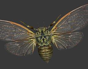 3D asset realtime Cicada