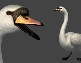 3D Swan Bird