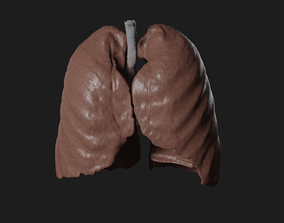 low-poly Lungs 3D Model