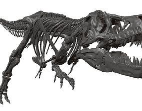 3D Tyrannosaurus T-rex high quality skeleton