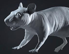 3D Rat Sculpt