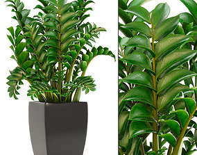 3D Zamioculcas plants