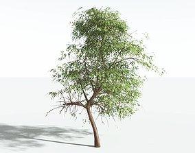 EVERYPlant Muira Puama SINGLE --1 Model--