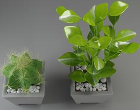 plants cactus flora nature succulent 3D