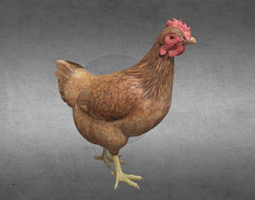 Chicken 3D asset low-poly