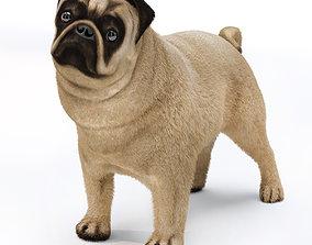 Pug 2 3D model