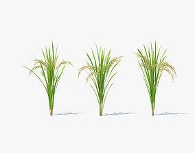 3D Rice Plant