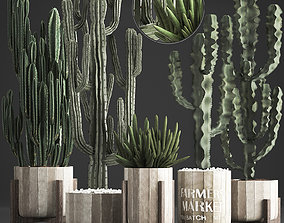 Collection of Exotic Cactus Plants 374 3D model