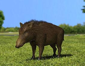 3D model Wild Boar eurasian