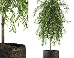 Plants collection 292 3D