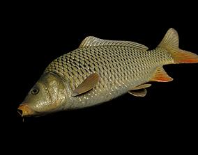 3D model Common carp fish