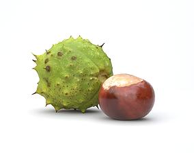 3D asset Chestnut Photoscan