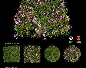 Plant Flower set 05 3D