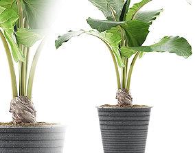 Plants Collection 52 3D