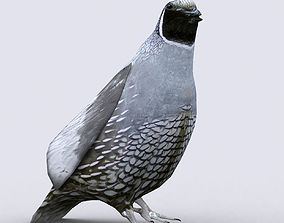 animated 3DRT - Quail