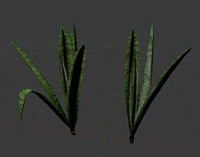 Grass Plant Sansevieria 2in1 3D model
